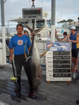ANGLER: Henry Higgins SPECIES: Yellowfin Tuna WEIGHT: 58.8 Kg TACKLE: 24 Kg line - 2