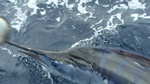 Skipper Dave Feneck and crew capture an Est. 90 Kg Striped Marlin
